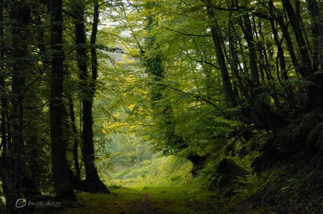 Bosque-de-redes-A_Diego