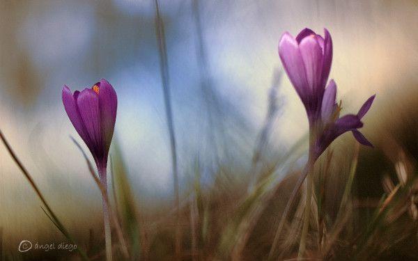 flores-parque-natural-de-redes
