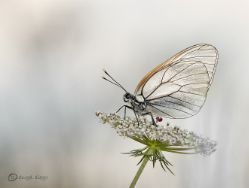 actividades-en-el-parque-natural-de-redes-mariposas